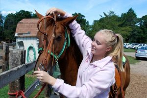 a girl brushing a horse